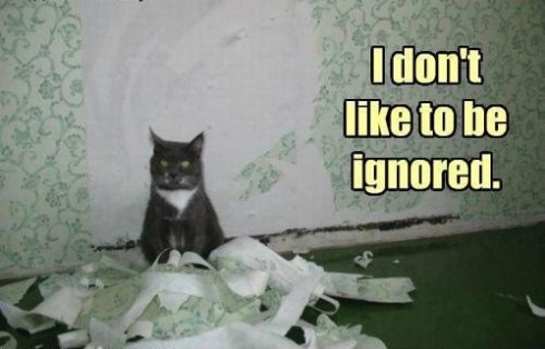 An image of an angry looking cat surrounded by shredded wallpaper, overlaid with the text I don't like to be ignored.