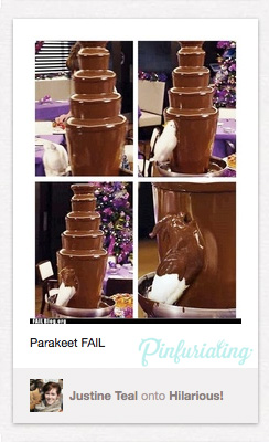 Images taken from a video of a Parakeet indulging in a chocolate fountain
