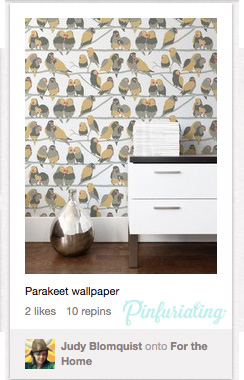 Parakeet wallpaper. Pictures of parakeets. Yes, it exists.