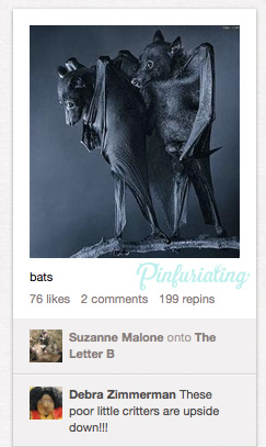 A picture of two bats hanging, flipped, so it looks like they're standing up.