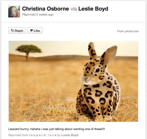 An image of a bunny with cheetah print superimposed, looking like some sort of serengeti bunny.
