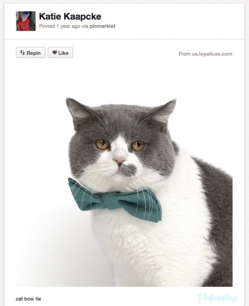 Screencap of a Pinterest pin of a very fat, soft cat wearing a teal blow tie, its eyes tearing up in embarassment, and, perhaps, anger.